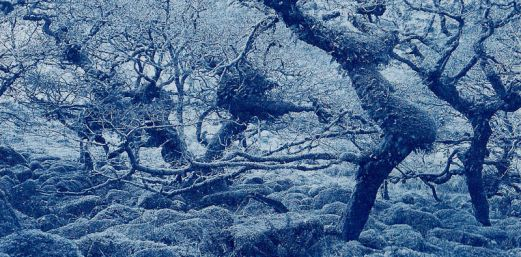 dartmoor-wistmans-cyanotype-2