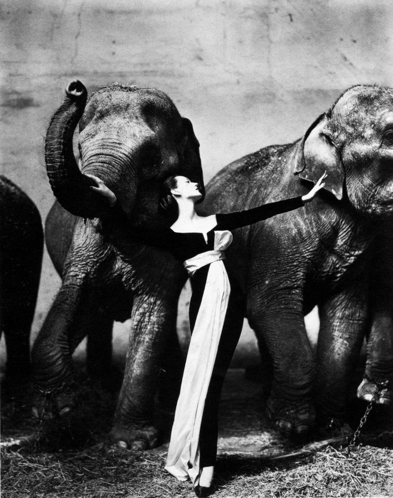 Avedon Dovima with Elephants