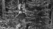 Promluvy se stromy