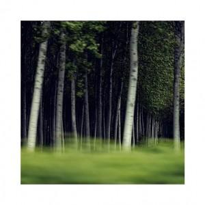treesx
